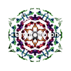 Logo Cryptomorph